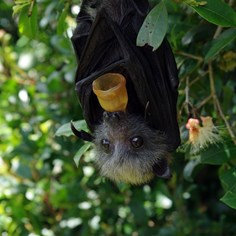 The Cutest Story About Bats Ever Told